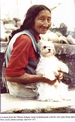 native-tibetan-woman-with-apso1.jpg