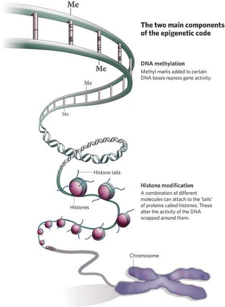 epigenome.jpg