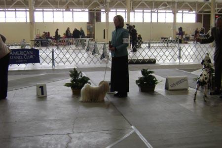 dogshowanddogpicturesjan2008031web.jpg