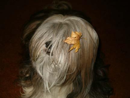 autumnrosesm