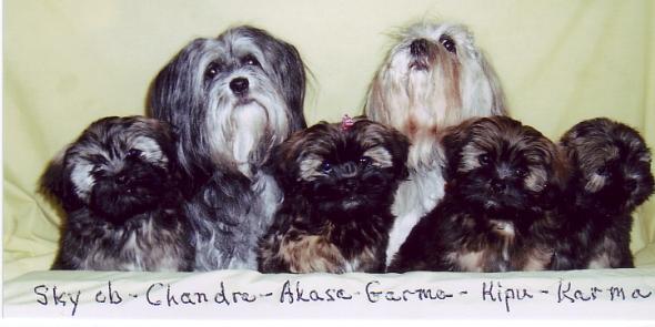 chandras-family