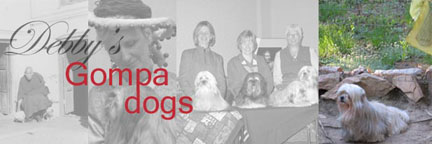 debbys-gompa-dogs