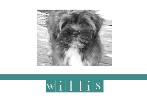 williswordpress1