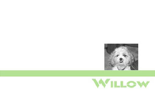 willowwordpress