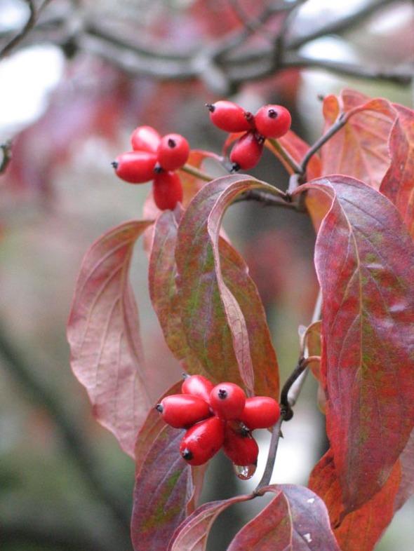 BerriesBlog